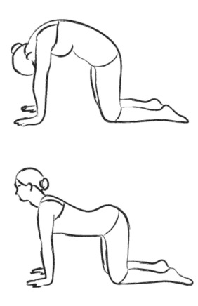 Image result for cat cow pose