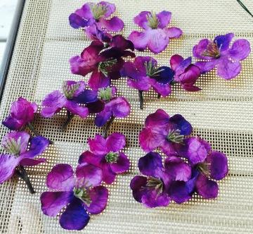 Flowers cut